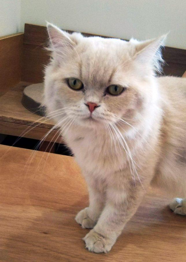 moff猫3