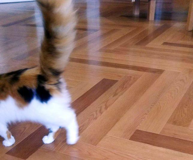 猫カフェ風景 猫