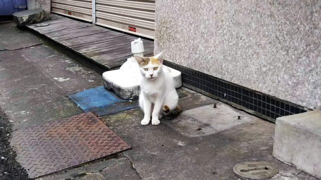 ラーメン亭入り口の猫