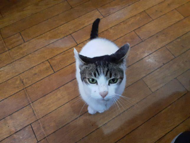 カナディアン猫